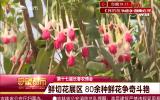【第十七届长春农博会】鲜切花展区鲜花朵朵开 80余种鲜花争奇斗艳