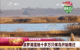 守望都市 十分壮观!农安县波罗湖湿地十多万只候鸟开始南迁