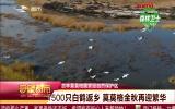 守望都市 莫莫格自然保护区迎1500只白鹤驻足