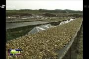 磐石:食用菌产业规模化发展 品牌化增收