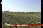 新闻特写:玉米村做起了桃经济