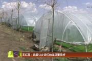 王红霞:我要让乡亲们的生活更美好