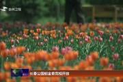 长春公园郁金香竞相开放
