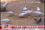 【独家视频】小区鸽子满天飞 粪便难清还扰民