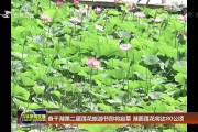 查干湖第二届莲花旅游节即将启幕 湖面莲花将达80公顷