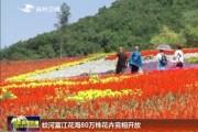 蛟河富江花海80万株花卉竞相开放