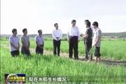 """""""砥砺奋进的五年·我在总书记身边""""——海兰江畔稻花香"""