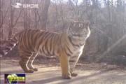 东北虎豹国家公园管理局在吉林省成立六个管理分局