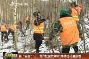 """新""""猫冬""""记:合作社里忙种树 绿叶红花喜迎春"""