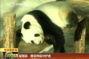 【节日我在岗】管丽颖:国宝熊猫守护者