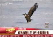 珲春敬信湿地 珍稀海雕驻足 吸引全国摄影者