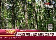 守望都市|红叶岭国家森林公园养生基地正式开放
