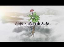 【微视频】吉林·长白山人参