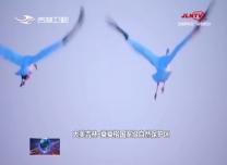 【庆祝新中国成立70周年微视频展播】白鹤国度