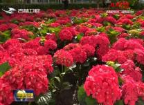 通化市花卉園:百花綻放醉山城