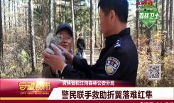 红隼落难路边 警民联手救助