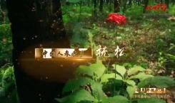 吉林省县域巡礼微视频系列|中国人参之乡 抚松