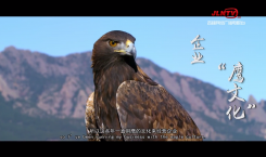 """【吉人吉相】回春伟——企业""""鹰文化"""""""