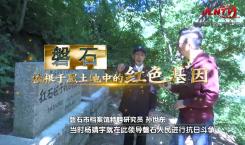 吉林省县域巡礼微视频系列|磐石根植于黑土地中的红色基因