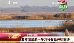 守望都市|十分壮观!农安县波罗湖湿地十多万只候鸟开始南迁