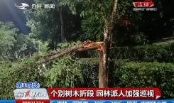第1报道|狂风暴雨刮倒树 路边车辆很受伤