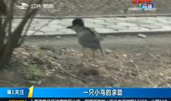 第1报道|一只小鸟的求助