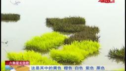 乡村四季12316_水稻田里玩艺术