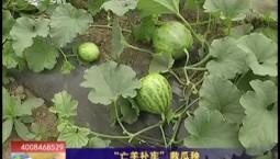 """乡村四季12316_""""亡羊补牢""""救瓜秧"""