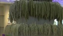 【心有大我 至诚报国】白城市农科院燕麦科技创新团队:干顶天立地事 做扎根基层人