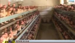 【保护环境 立行立改】长白山保护开发区池西区推进畜禽养殖禁养区内养殖场关闭工作