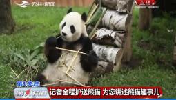 """""""嘉嘉""""""""梦梦""""回川!为您讲述熊猫趣事儿"""