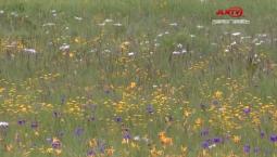 【微视频】长白山西景区高山花园——一片花的海洋