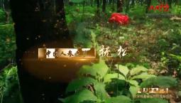 吉林省县域巡礼微视频系列 中国人参之乡 抚松