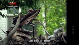 【微记录】寻找浪木