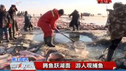 第1报道|腾鱼跃湖面 游人观捕鱼