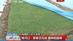 第1报道|梅河口市育苗已完成 插秧陷困境