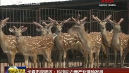 长春市双阳区:科技助力鹿产业蓬勃发展