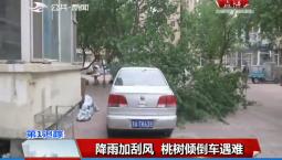 第1报道|降雨加刮风 桃树倾倒车遇难