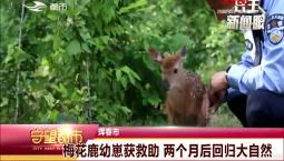 守望都市|梅花鹿幼崽获救助 两个月后回归大自然