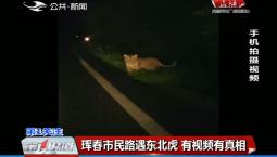 第1报道|珲春市民路遇东北虎 有视频有真相