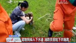 第1报道|宠物狗掉入下水道 消防员冒险下井施救