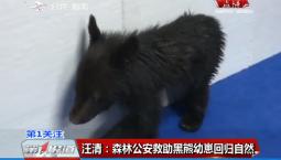 第1报道|汪清:森林公安救助黑熊幼崽回归自然