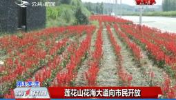 第1报道|莲花山花海大道向市民开放