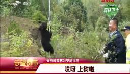 守望都市|野生小黑熊被困泥潭 民警救助放生