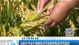 新闻早报|水稻分子设计育种标志性品种在我省示范成功