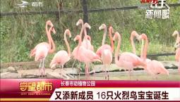 守望都市|长春市动植物园又添新成员 16只火烈鸟宝宝诞生