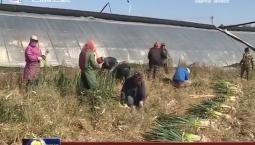 公主岭:种植业结构调整促进农民增收