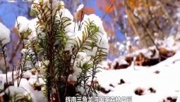 最美吉林丨雪后龙湾