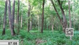 新闻早报|砍树变护林 转型迎蜕变