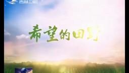 """《好好學習》今晚播出""""總書記關注我家鄉""""系列之《希望的田野》"""